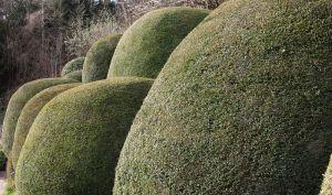 800px-Topiary_(3356666647)